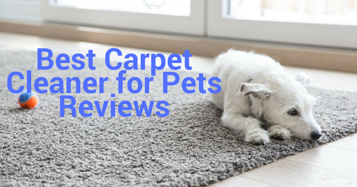 Best Rug Cleaner For Pet Urine How To Get Stains Out